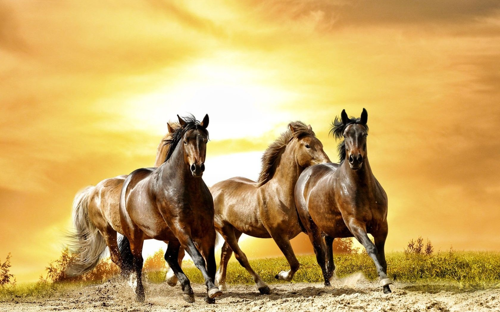 Running Horses Wallpaper - WallpaperSafari