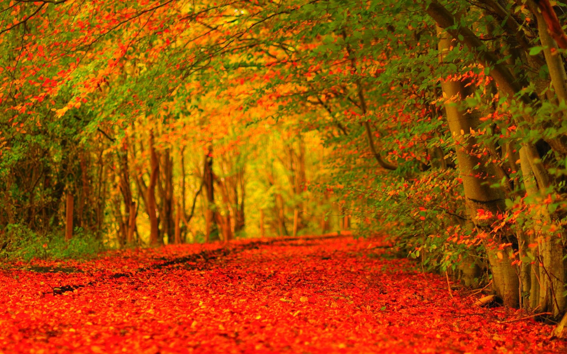 Autumn Wallpaper Widescreen   EchoMon 1920x1200