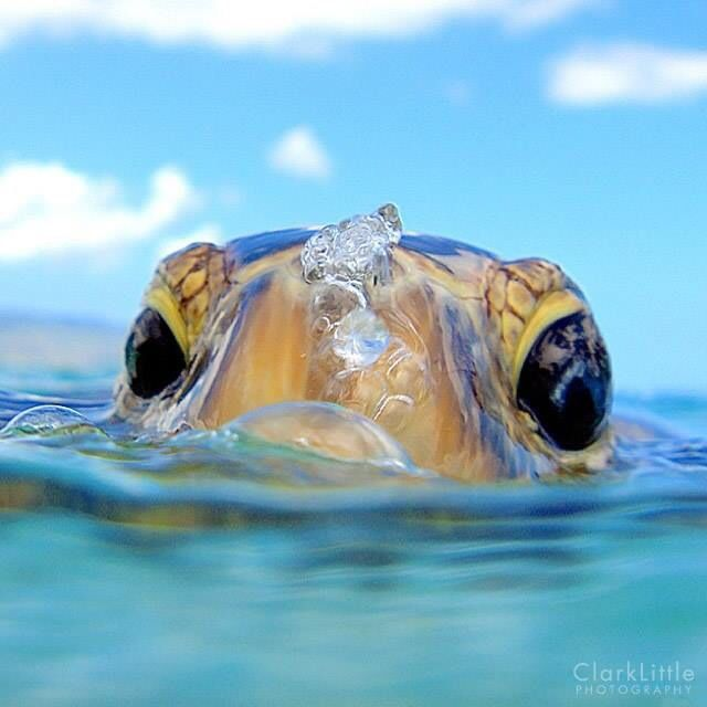 Clark Little Photography Hawaii My home Pinterest 640x640