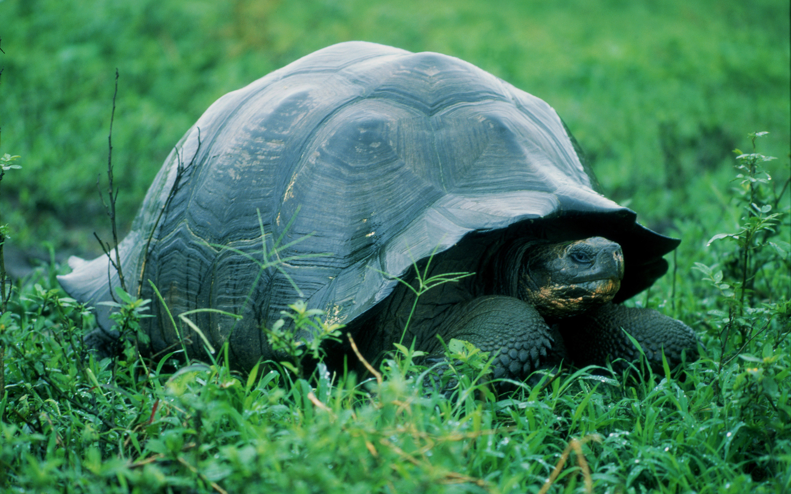 Funny 3d Animal Turtle Wallpapers Hd: I Like Turtles Wallpaper