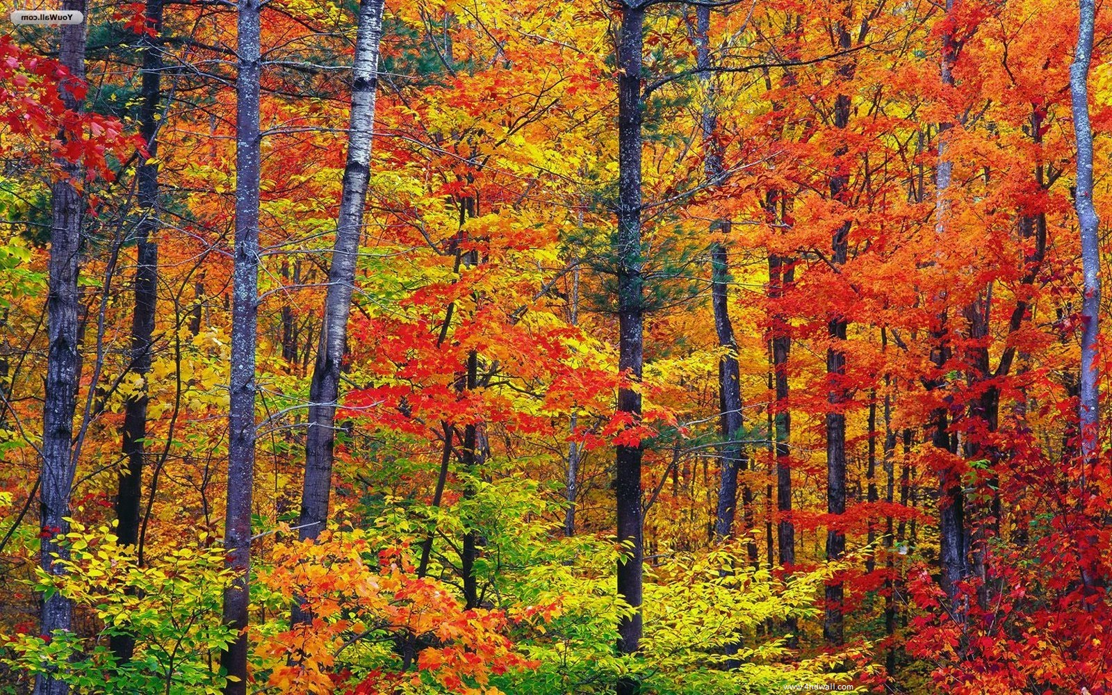 Fall Season Wallpaper Free