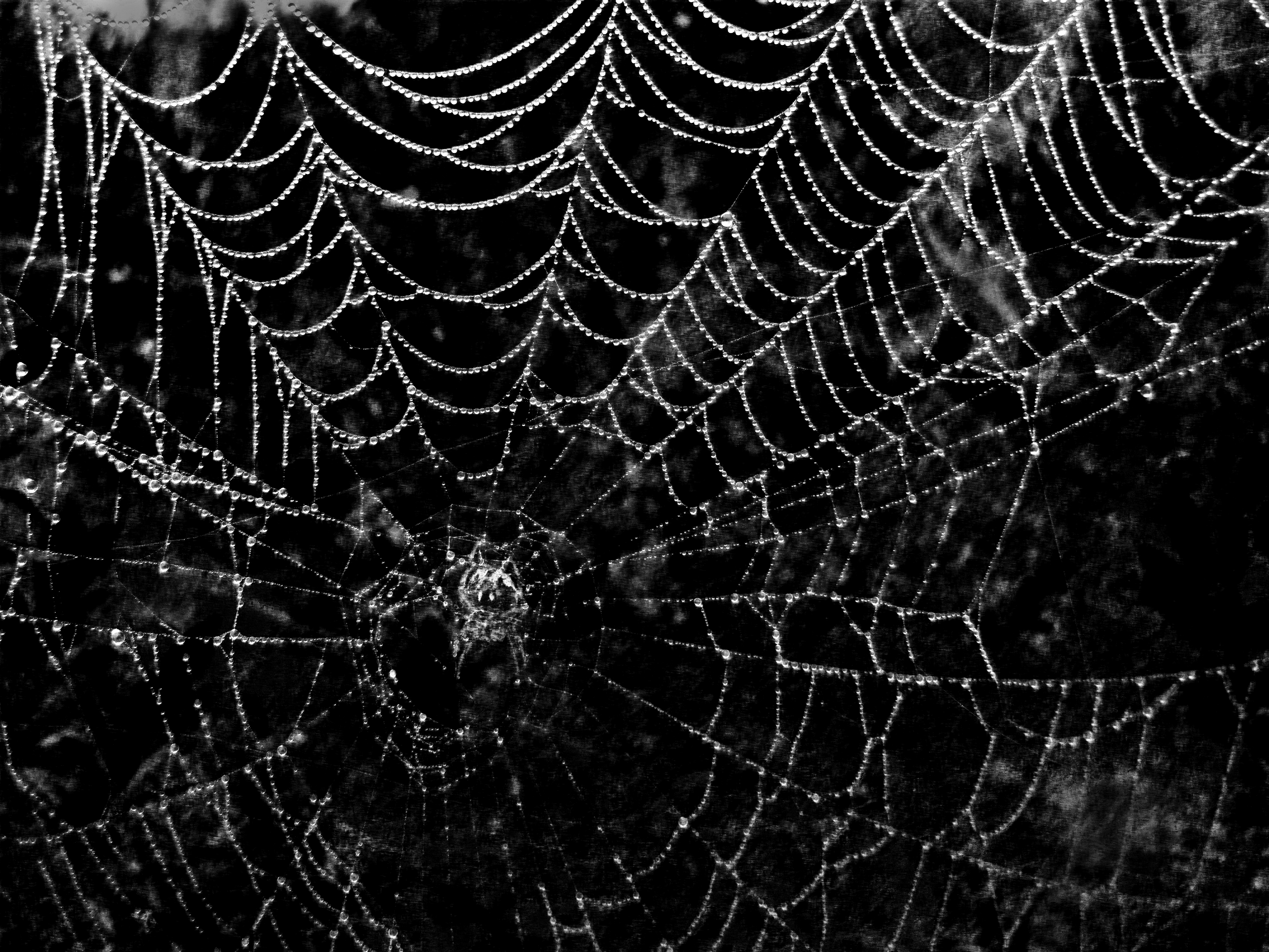 Spiderweb Background - WallpaperSafari Creepy Pictures