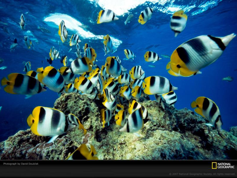 HD National Geographic Magazine Wallpaper Download   145260 800x600