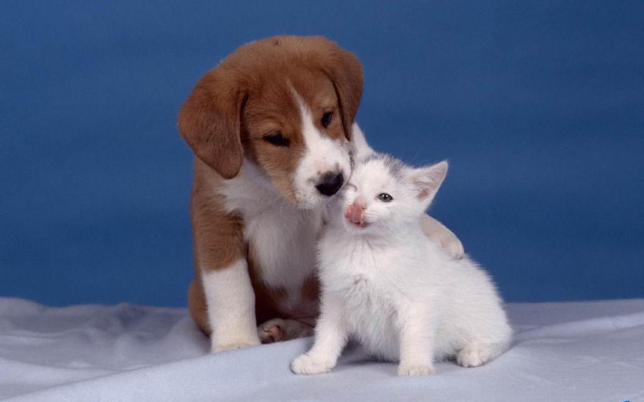 Dog and Cat Wallpaper   Teddybear64 Wallpaper 16835281 1280x800