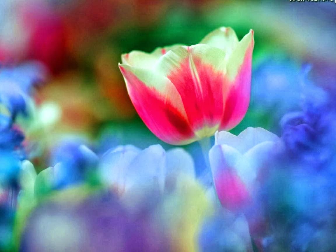 Pretty Rainbow Flowers