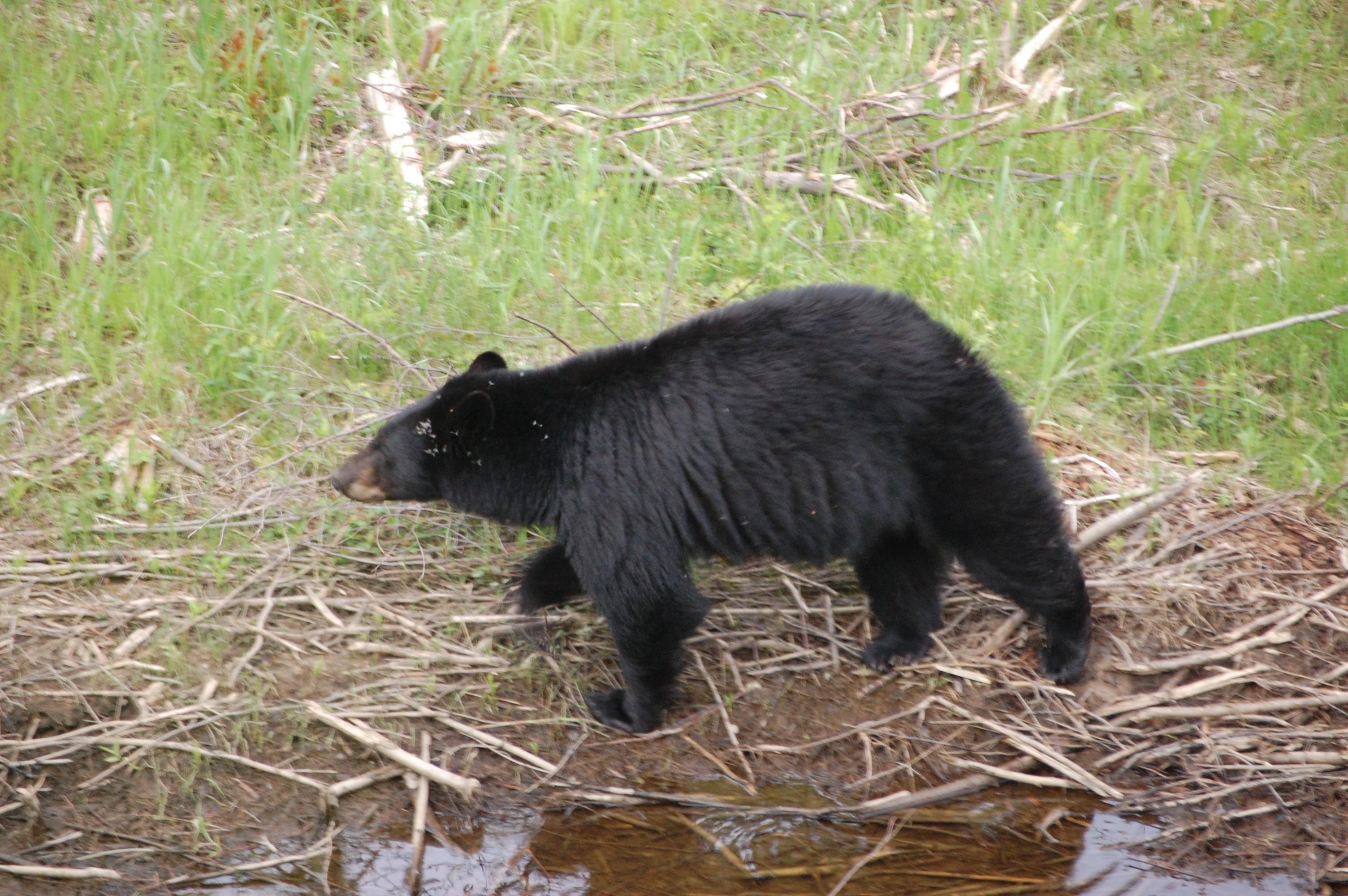 Moose Bear10jpg 3008x2000