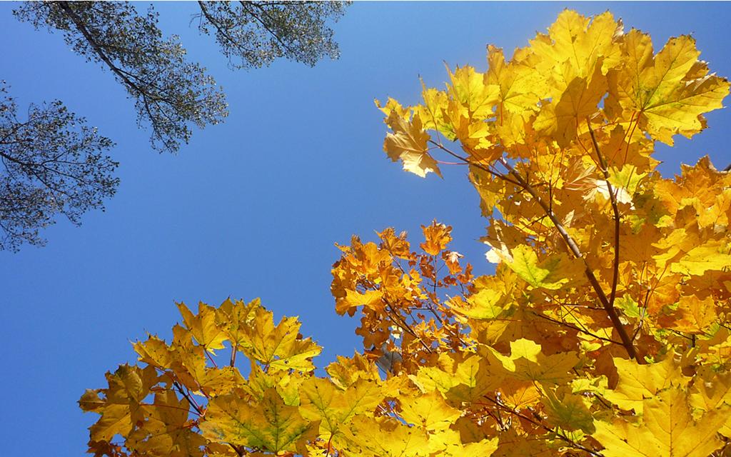 Autumn Leaves Windows 7 Desktop Backgrounds WindowsObservercom 1024x640