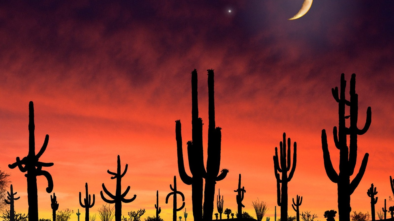 Arizona wallpaper Saguaro National Park in Arizona Wallpaper for 1366x768