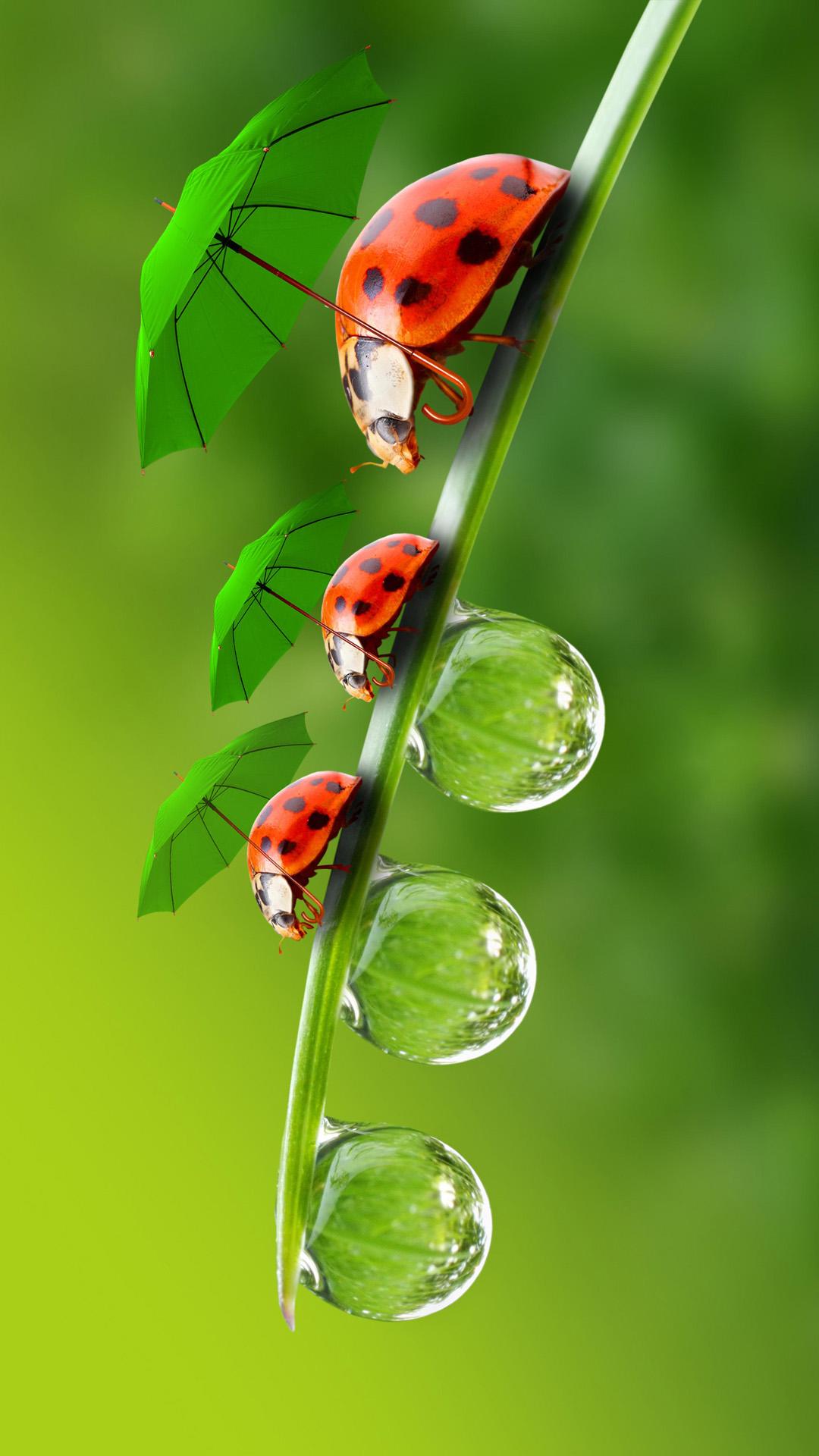 Three beetle iPhone 6 Wallpapers HD iPhone 6 Wallpaper 1080x1920