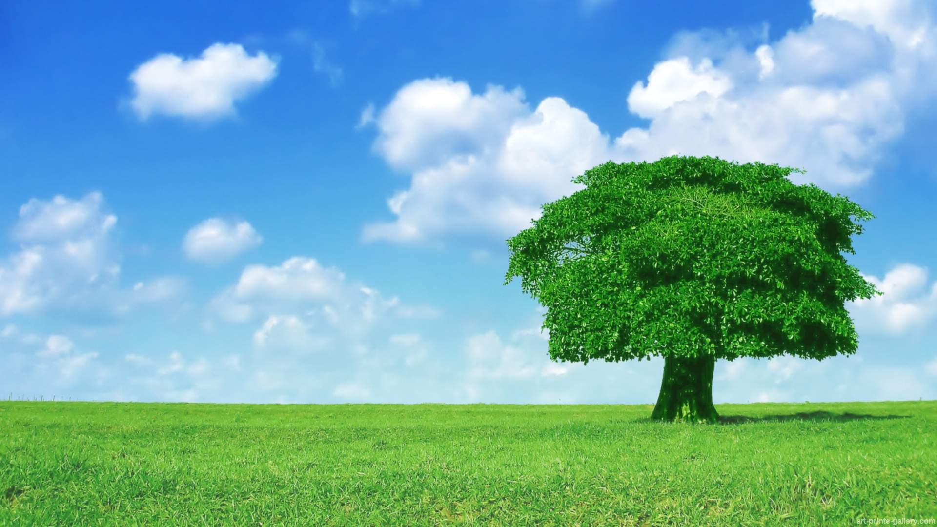 Hd wallpaper tree - Trees Wallpapers Forest Wallpaper Trees Full Hd Wallpapers Trees