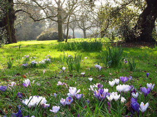 beautiful spring scenes image search results 500x375