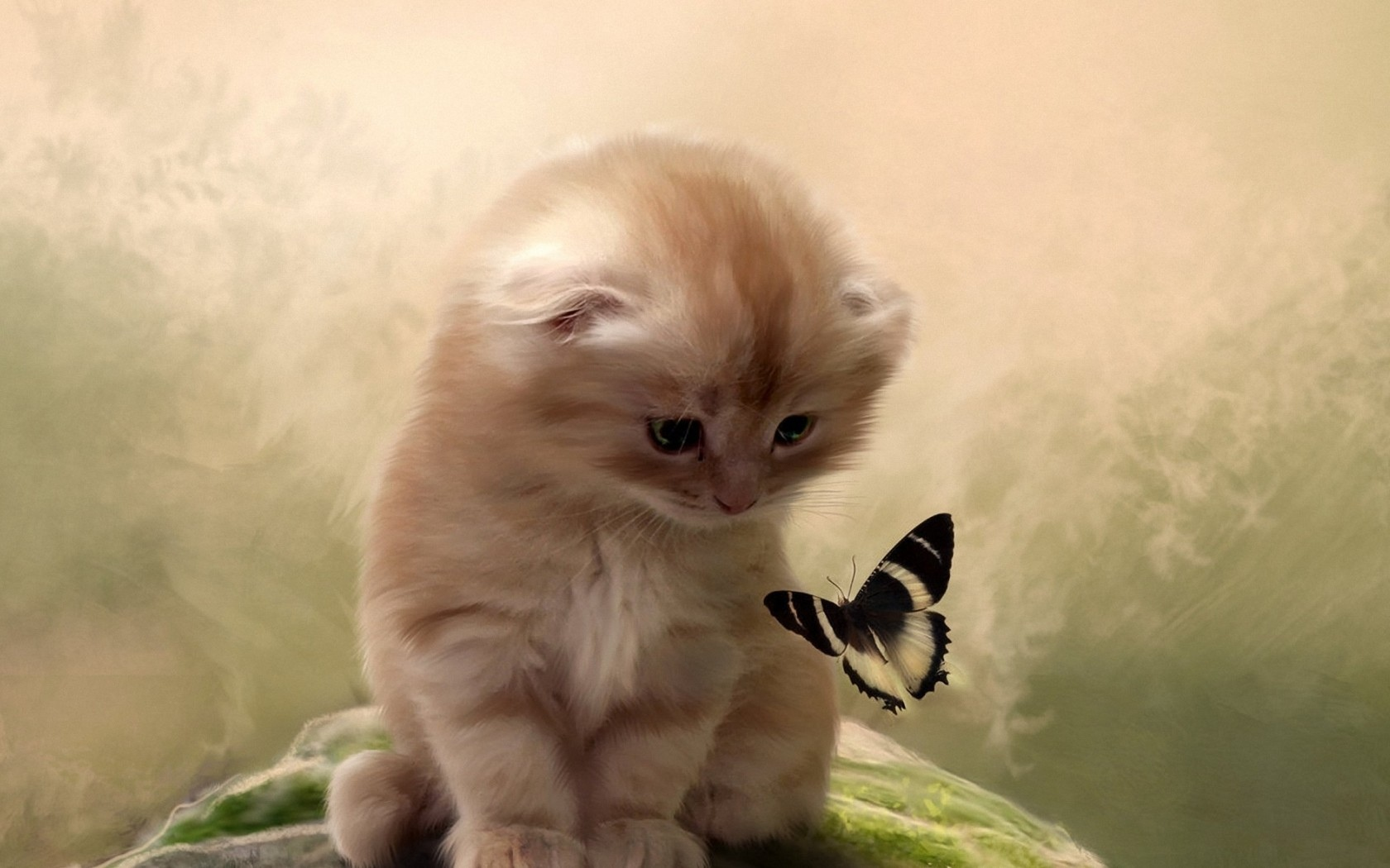 Butterfly kitten cat wallpaper 1680x1050 48565 WallpaperUP 1680x1050