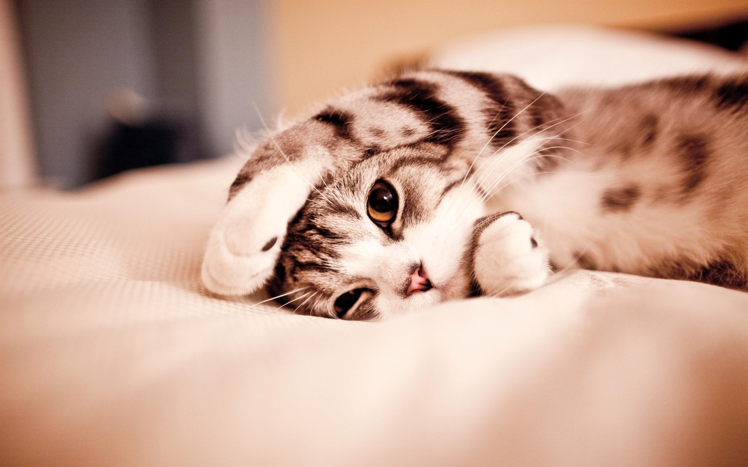 Cute Cat Sleep Wallpaper Desktop 5425 Wallpaper High Resolution 2500x1562