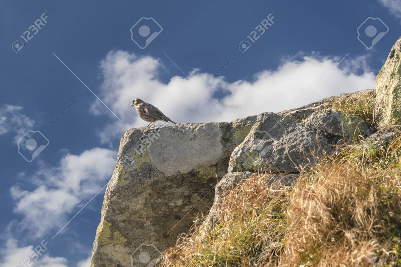 Bird Pipit On A Mountaintop In The Background Of The Cloudy Sky 1300x866