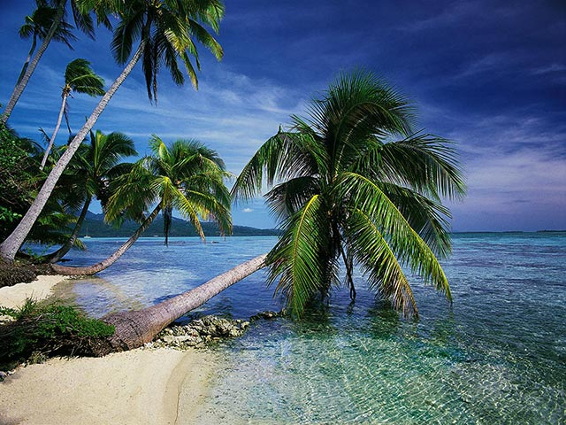 World Visits Tropical Island in Germany Cool Photos 640x480