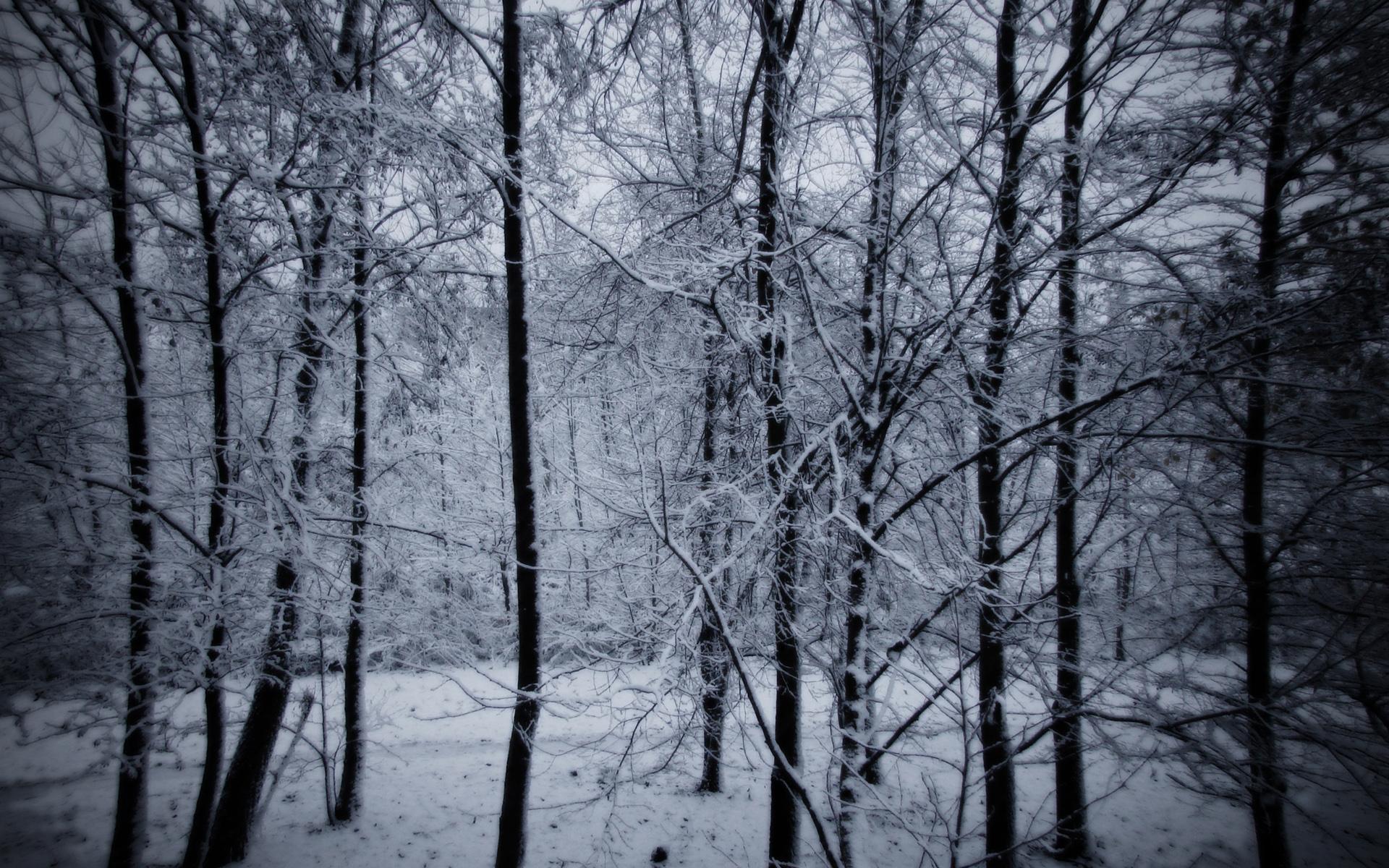 Snowy Forest Desktop Background Wallpaper 1920x1200