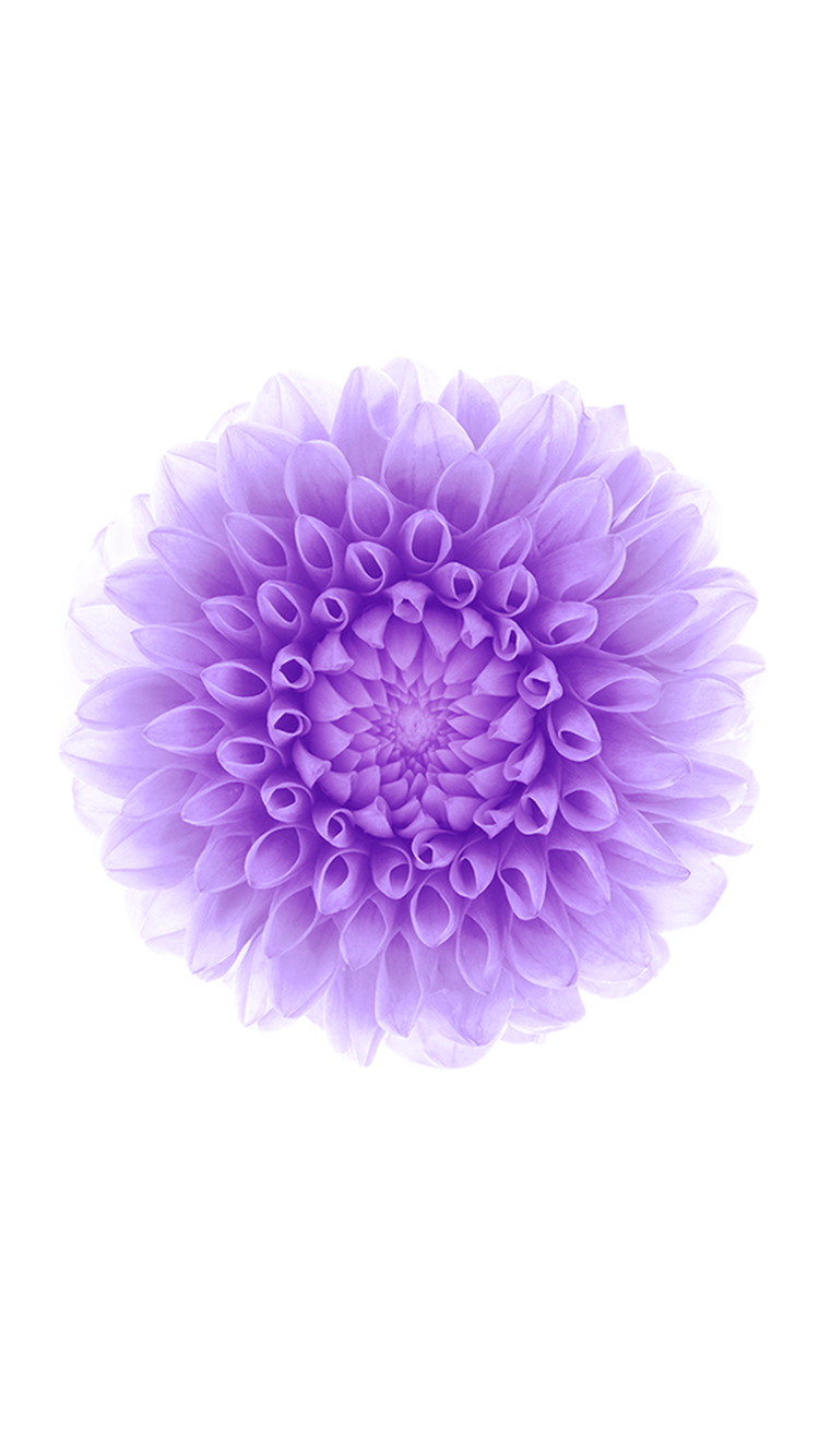 a purple flower  flower, Beautiful flower