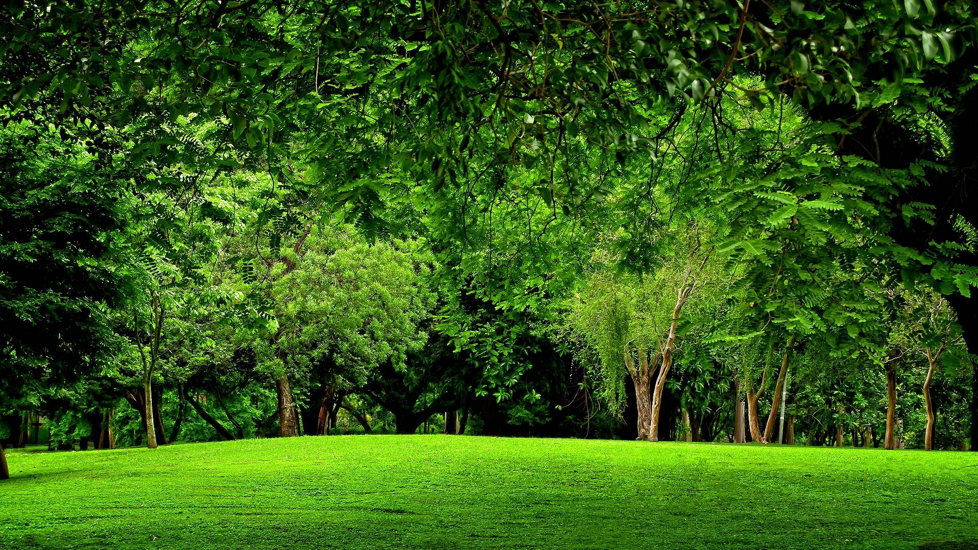 Green Forest Backgrounds 1920x1080