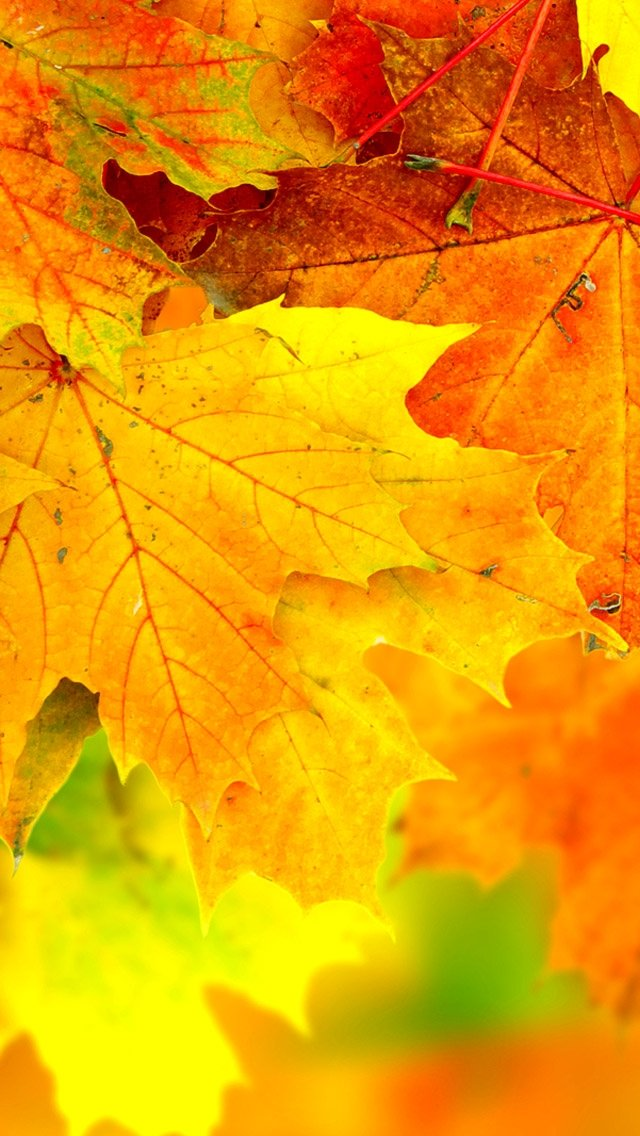 iPhone Wallpapers Awesome Autumn iPhone Wallpapers 640x1136