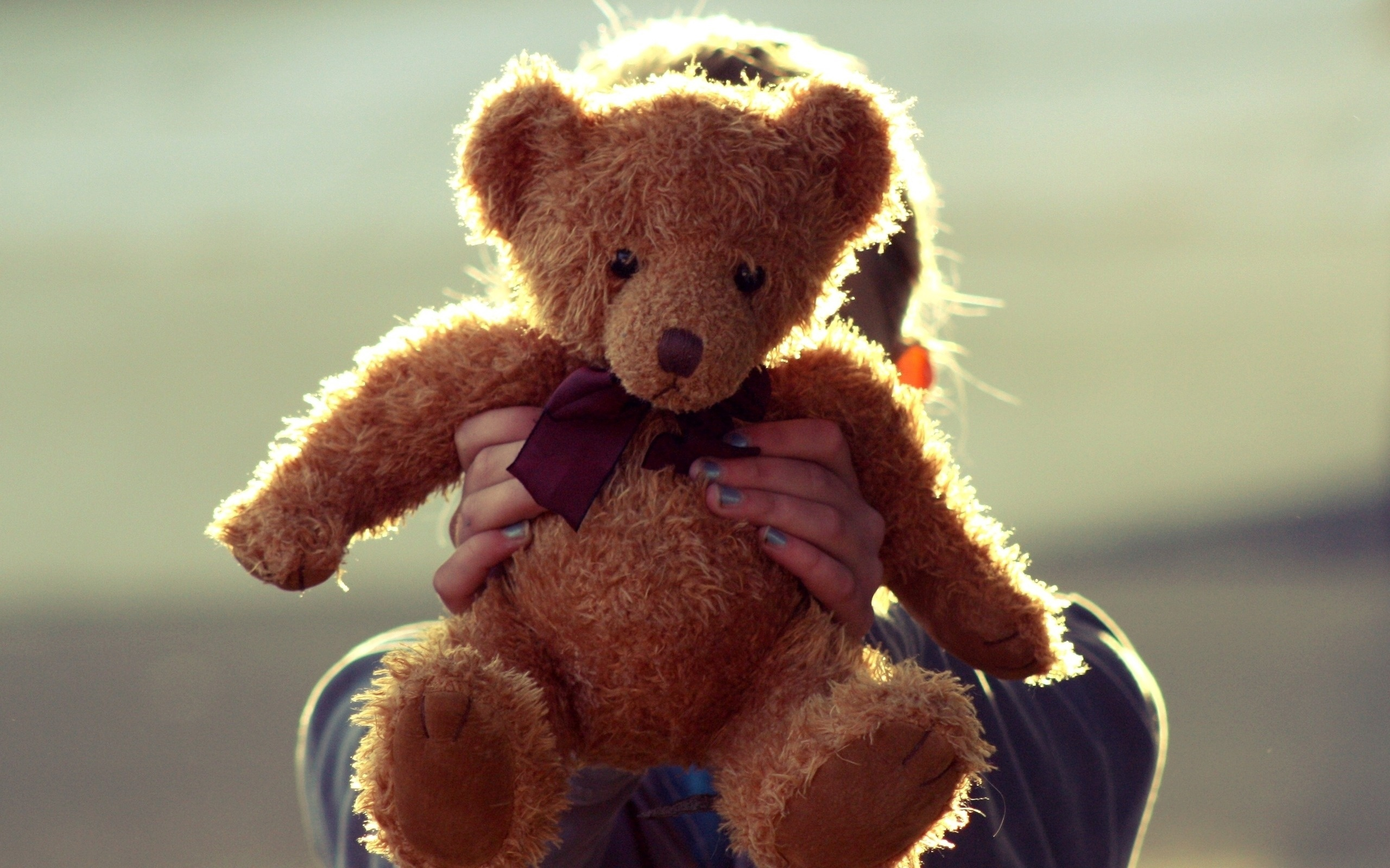 Teddy Bear Toy Hand   Stock Photos Images HD Wallpaper HD 2560x1600