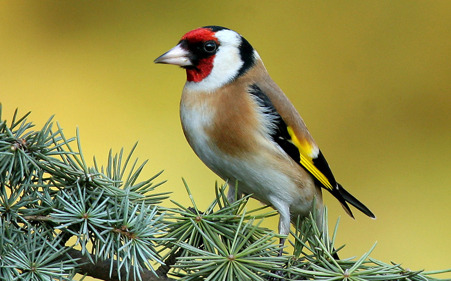 Tree Wallpaper photo and wallpaper All Goldfinch Tree Wallpaper 1440x900