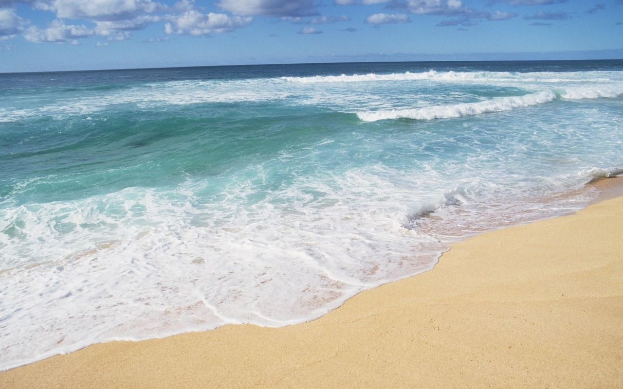 Download Hawaii Beach Shores wallpaper in Nature wallpapers with all 1280x800