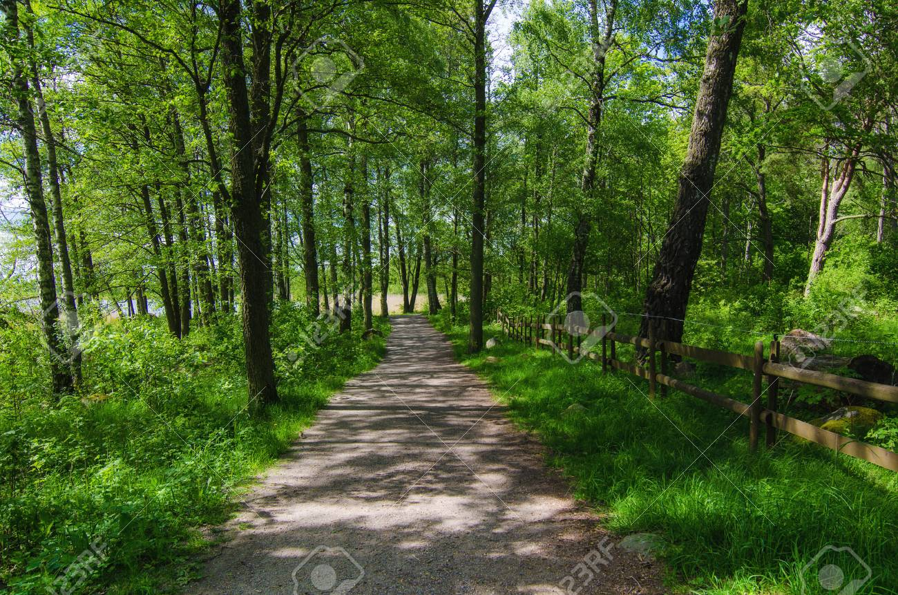 Green Sunny Spring Scandinavian Park With Hiking Trail Tranquil 1300x861
