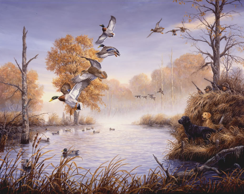 Ducks Unlimited Graphics Code Ducks Unlimited Comments Pictures 1024x814