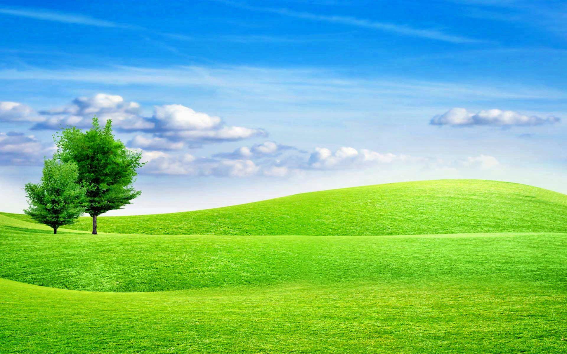This Gambar Wallpaper pohon di lapangan Rumput Alam Wallpapers HD 1920x1200