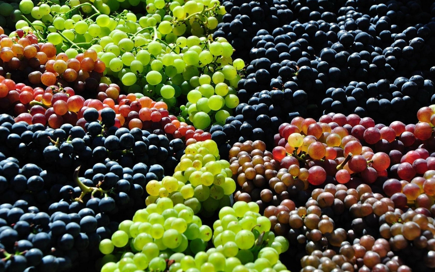 Grapes Wallpapers 1680x1050