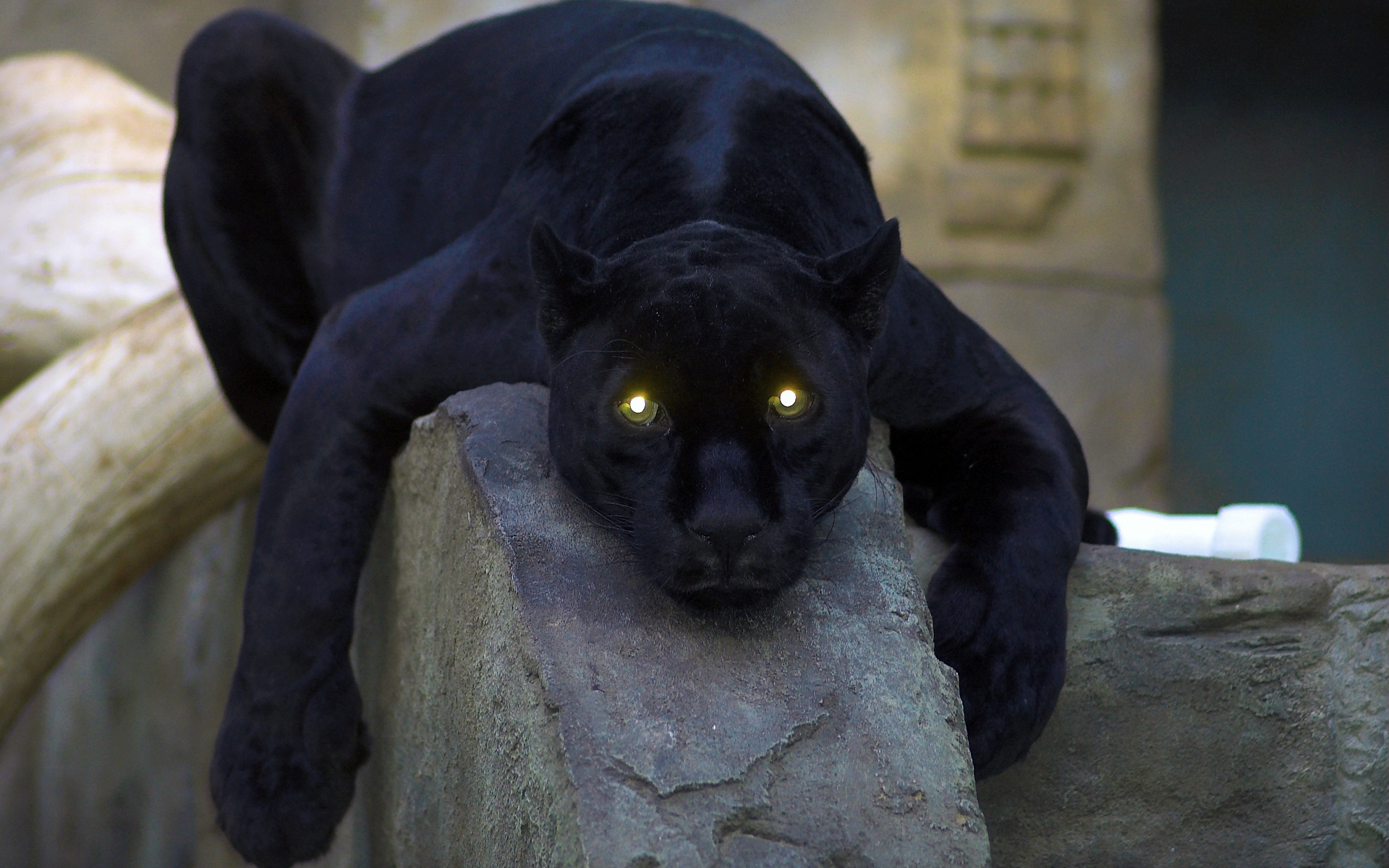 Panther Wallpapers Best Wallpapers 1920x1200
