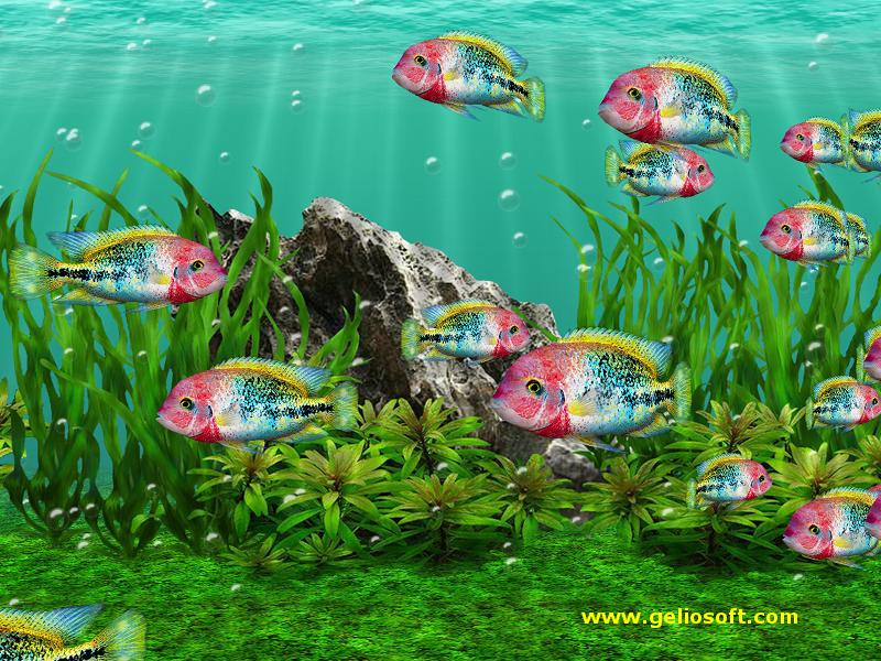 Moving Fish Wallpapers Animated Fish Aquarium...