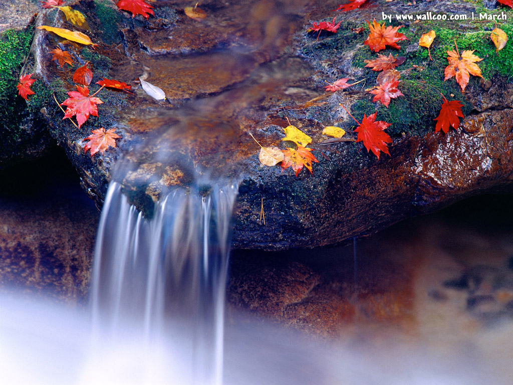 Nature Wallpaper Backgrounds Spring Wallpapers 1024x768