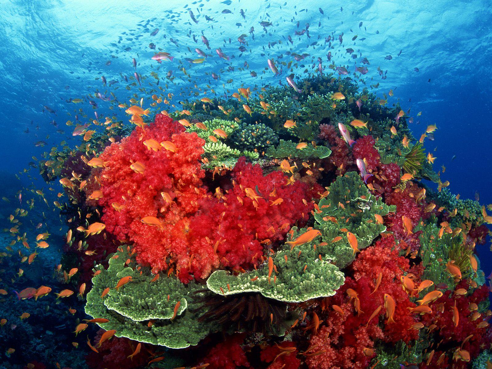 underwater reef coral sea ocean color sunlight wallpaper background 1600x1200
