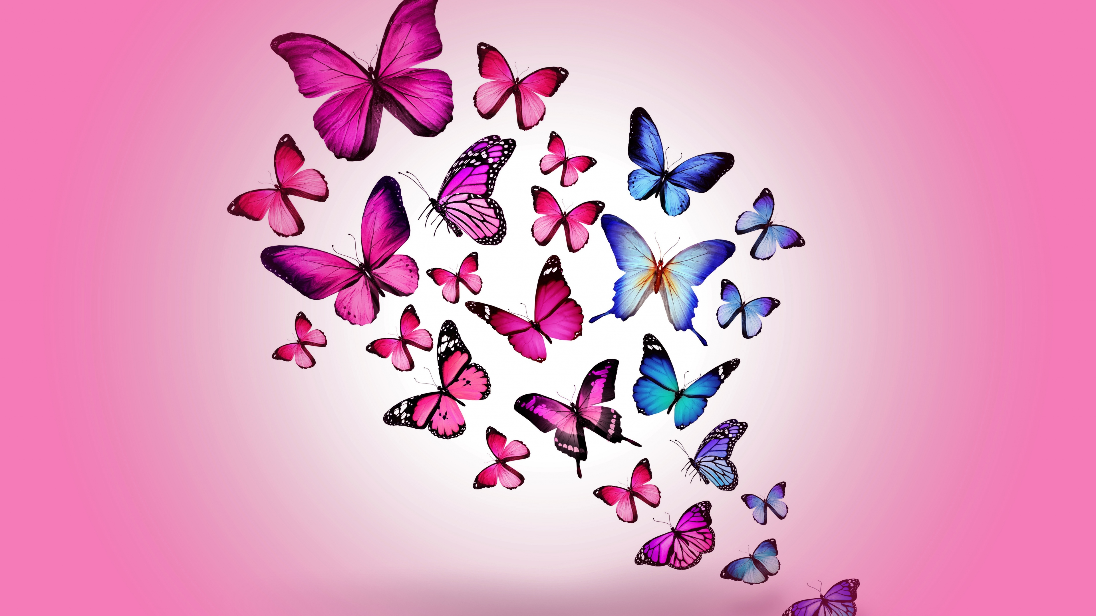 Butterfly Backgrounds download 3840x2160