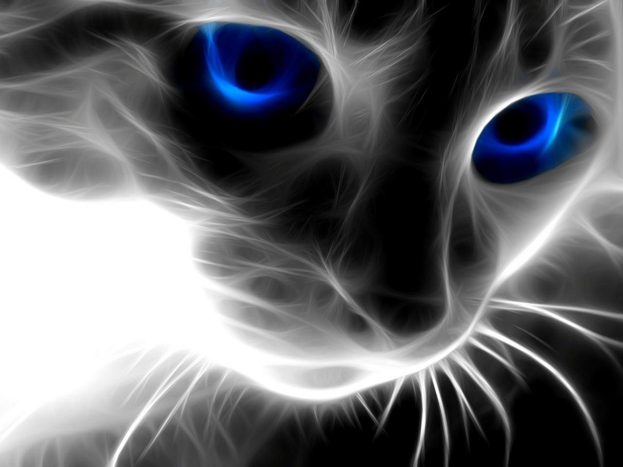 3D Cat Face 1280 x 960 Download Close 1280x960