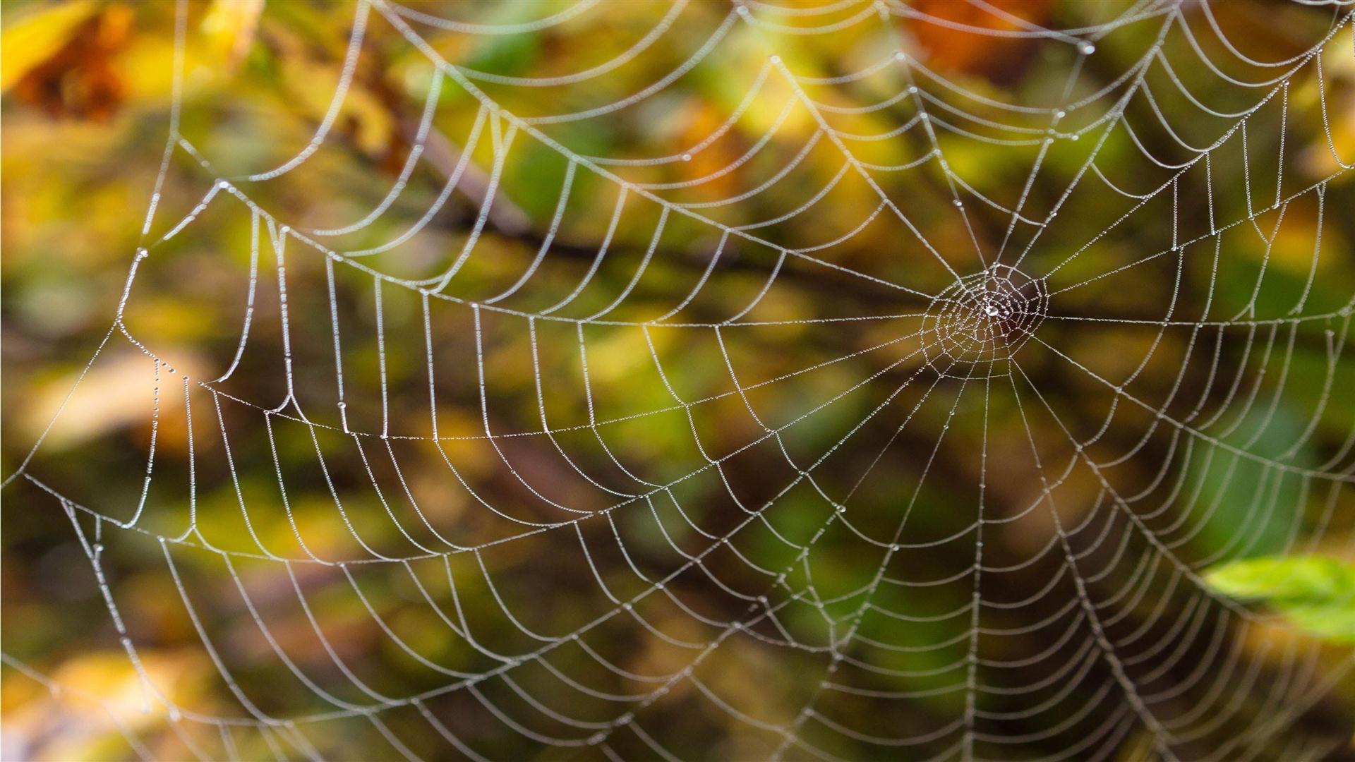 Download now Delicate Spider Web Hd Wallpaper Read description info 1920x1080