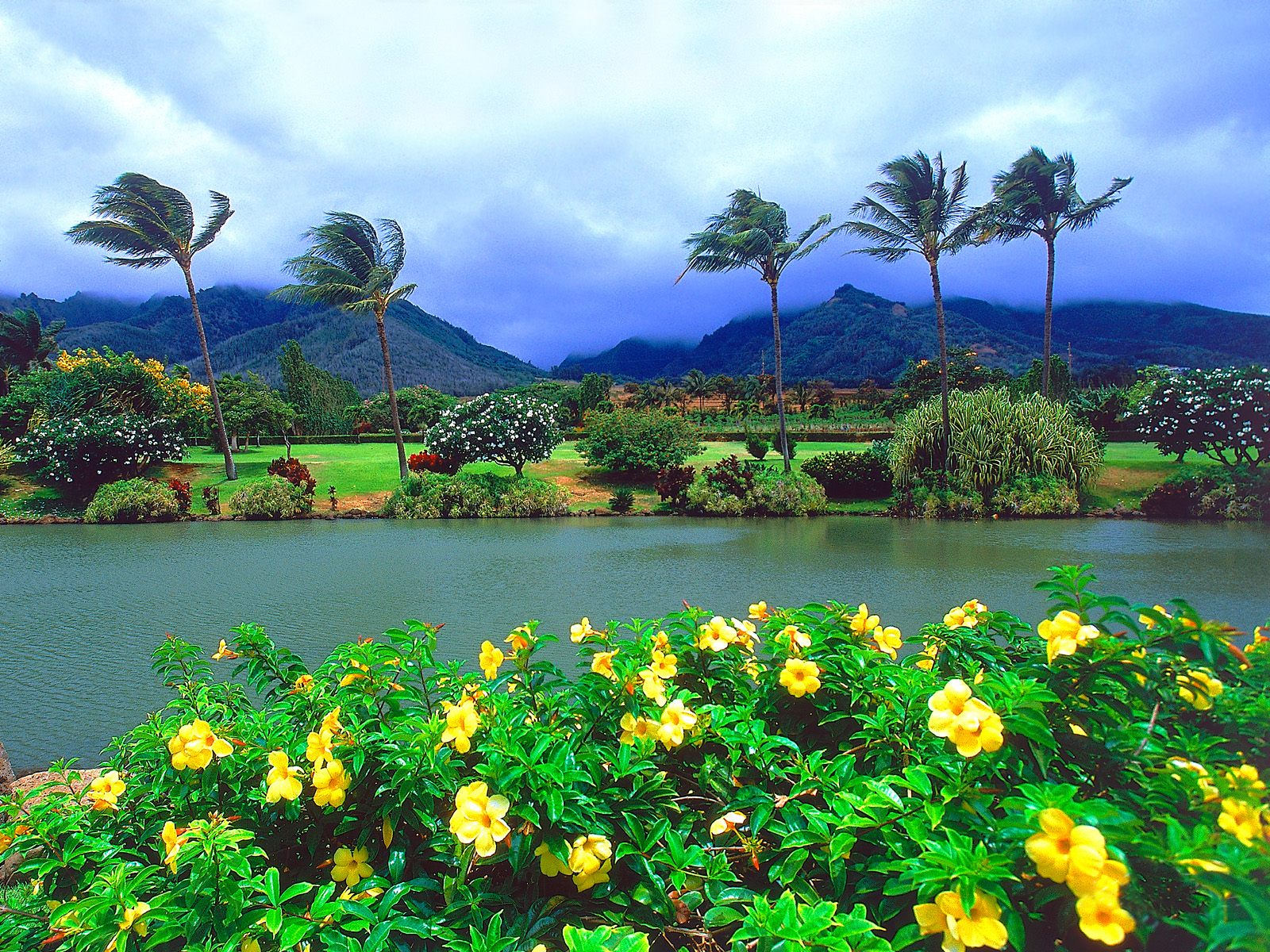 Download Maui Tropical Plantation Hawaii Wallpapers Pictures Photos 1600x1200