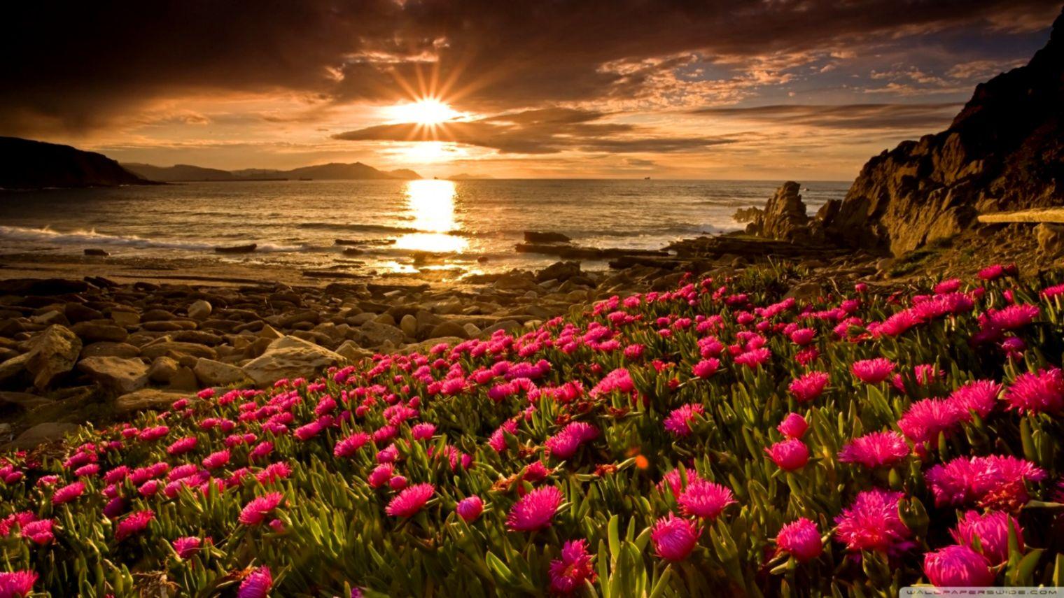 Free Download Beach Flowers 4k Hd Desktop Wallpaper For 4k Ultra Flowers 1520x855 For Your Desktop Mobile Tablet Explore 59 Flowers Images Desktop Backgrounds Background Flowers Images Flowers Wallpaper