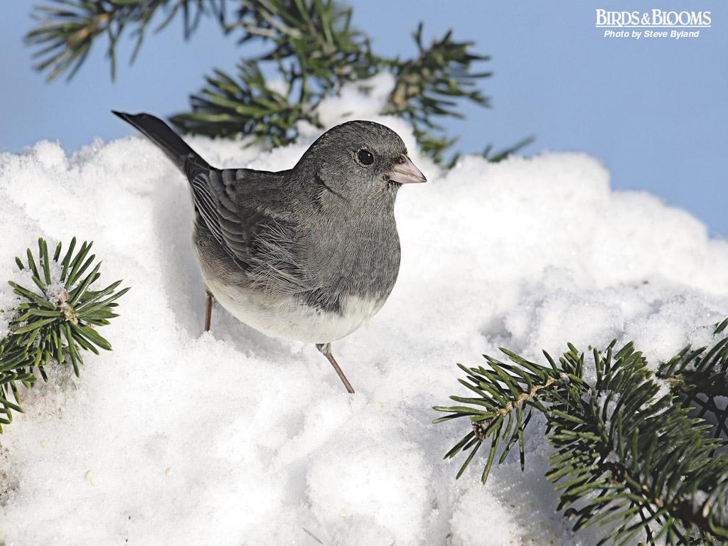 Birding Birds Blooms 1024x768