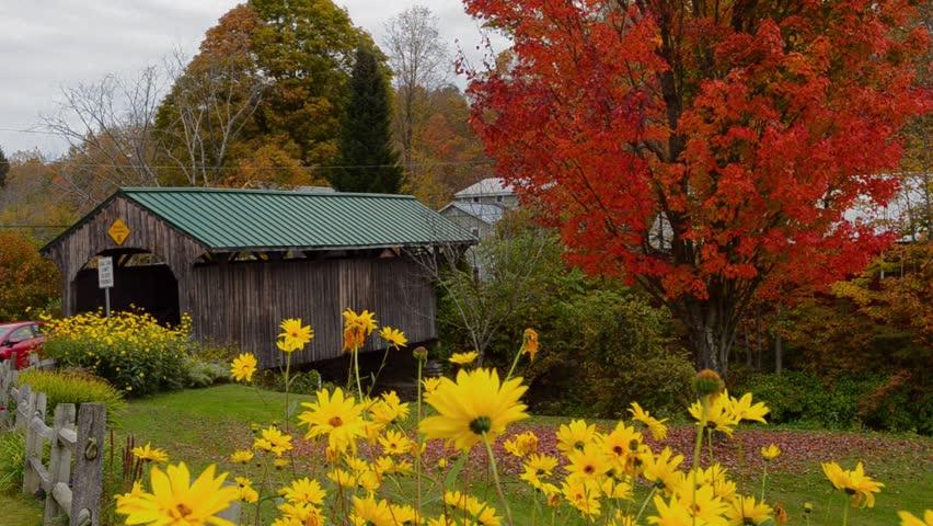 Fall Foliage Wallpaper