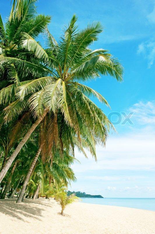 URL httpwwwsmscscomphotobeautiful palm tree wallpaper34html 532x800