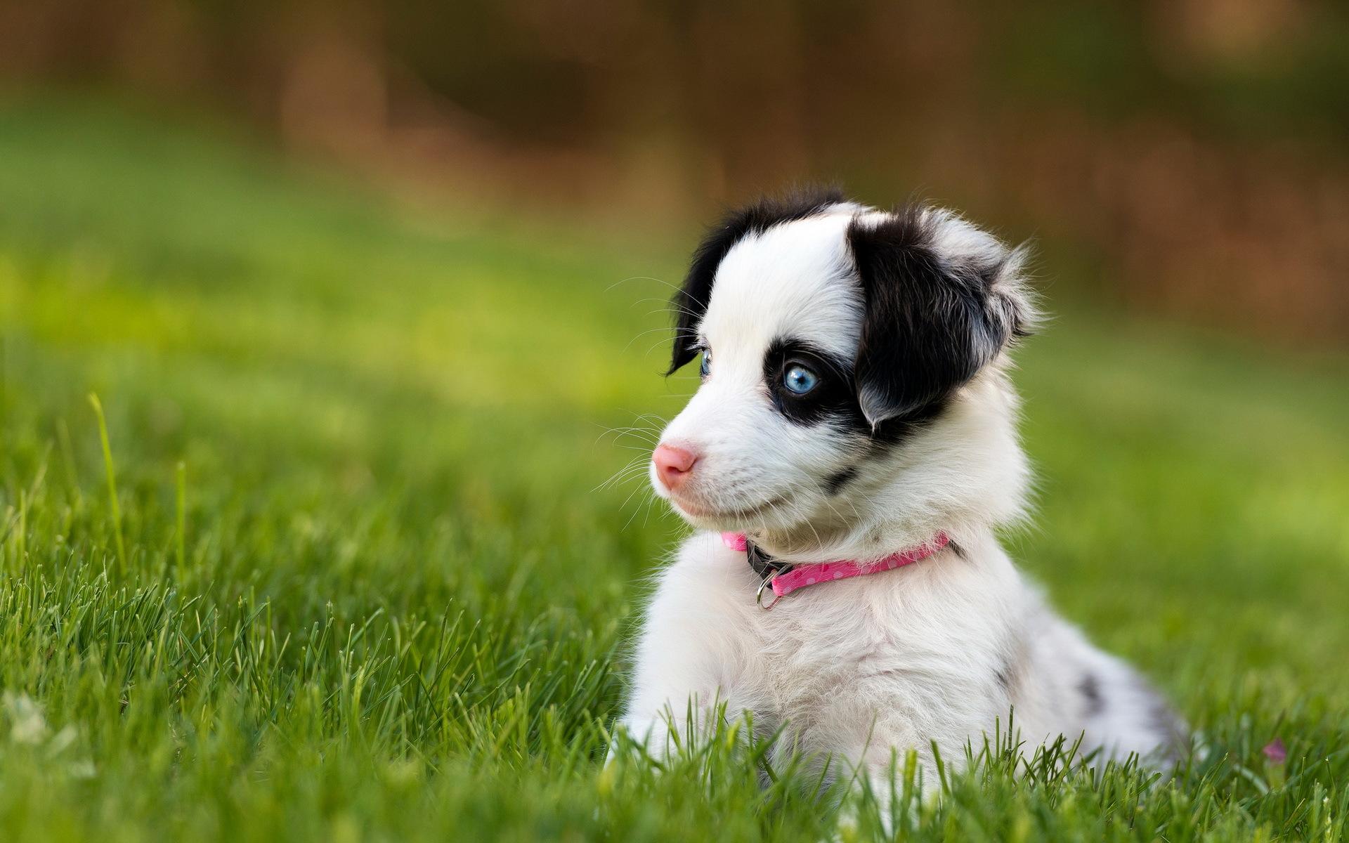 природа белая собака животное улыбка  № 1423918 без смс
