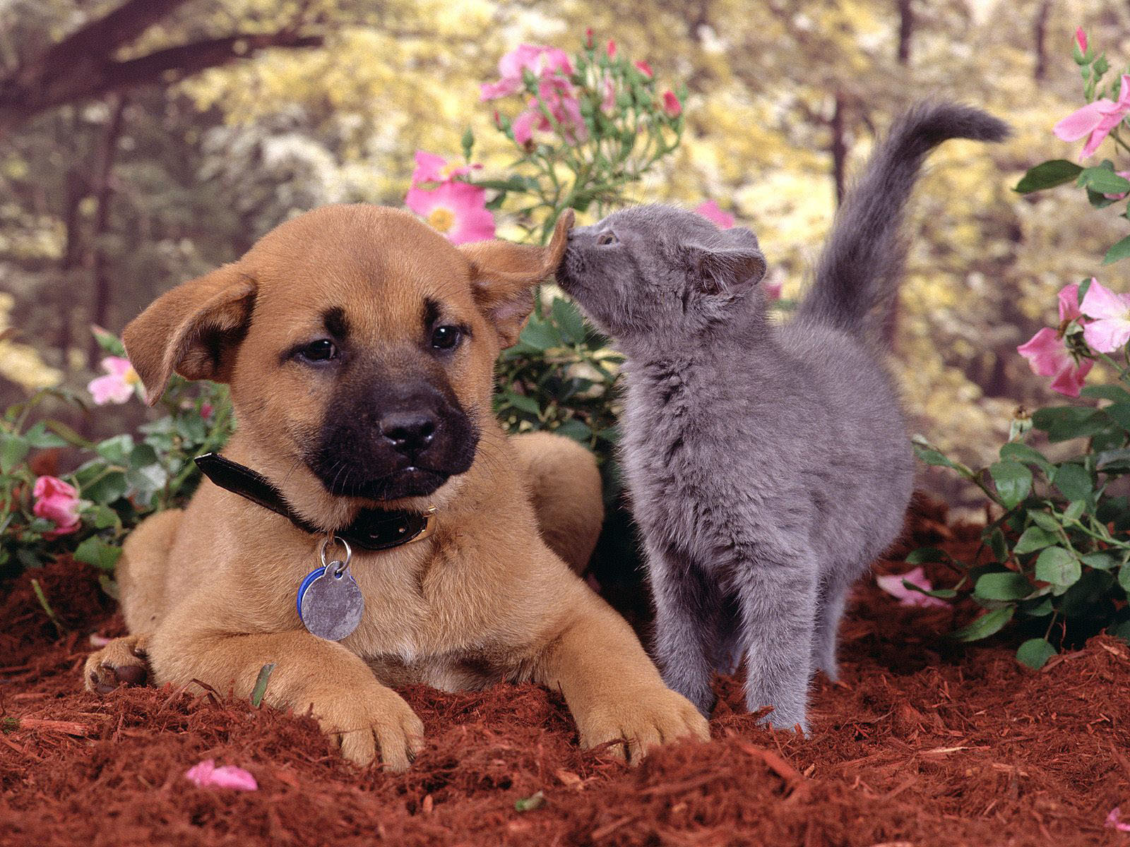 Dogs and Cats   dogs vs cats Wallpaper 13631892 1600x1200