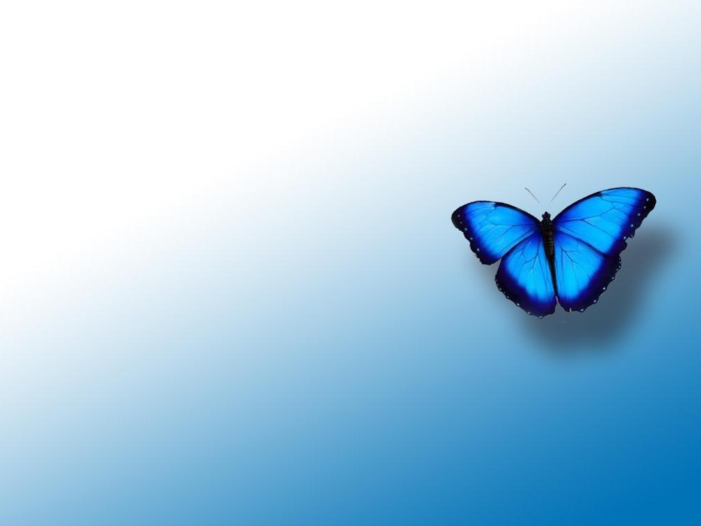 Free Download Blue Butterfly Wallpapers Wallpaper Blue