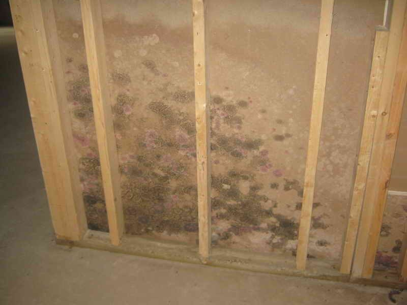 How to remove mold from walls is quite easy So you just need to do 800x600