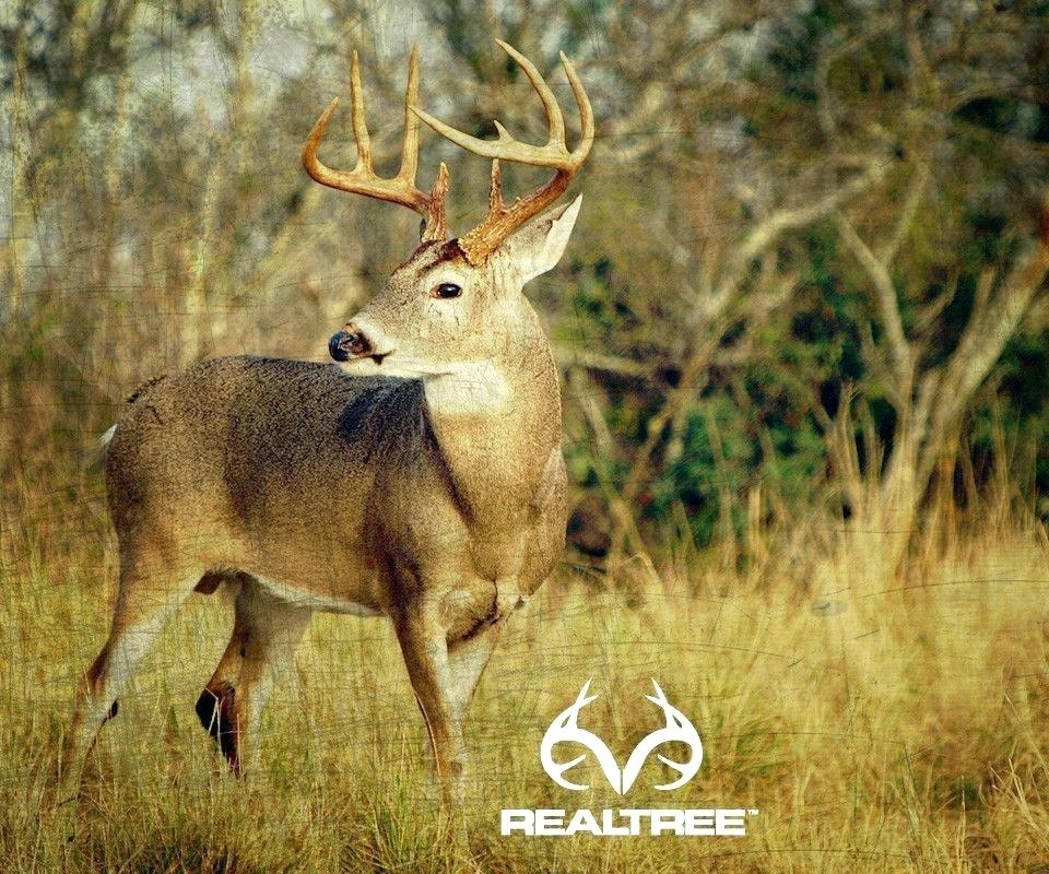 whitetail deer wall paper tedoyprimiciasinfo 960x800