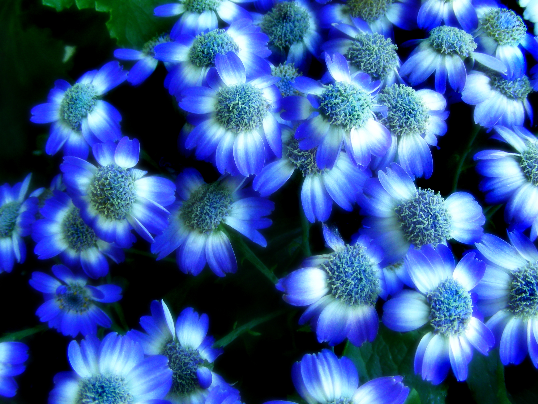 72+] Blue Flower Background on WallpaperSafari