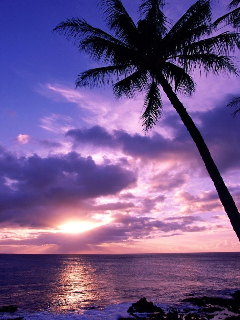 Tahitian Paradise Sunrise Beach   iPad iPhone HD Wallpaper 768x1024