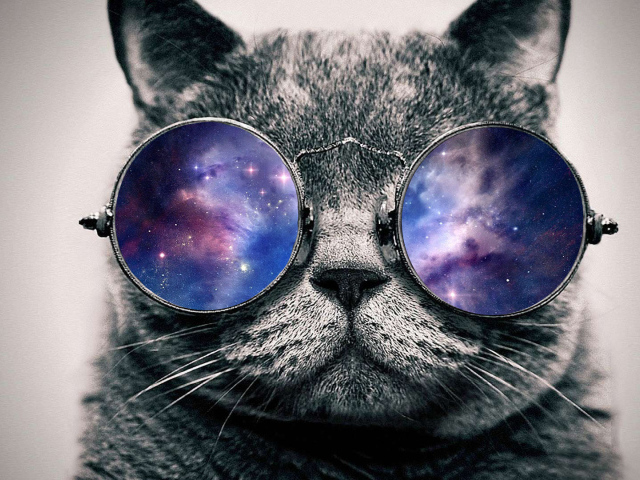 Cat in Space wallpapers and images   wallpapers pictures photos 640x480